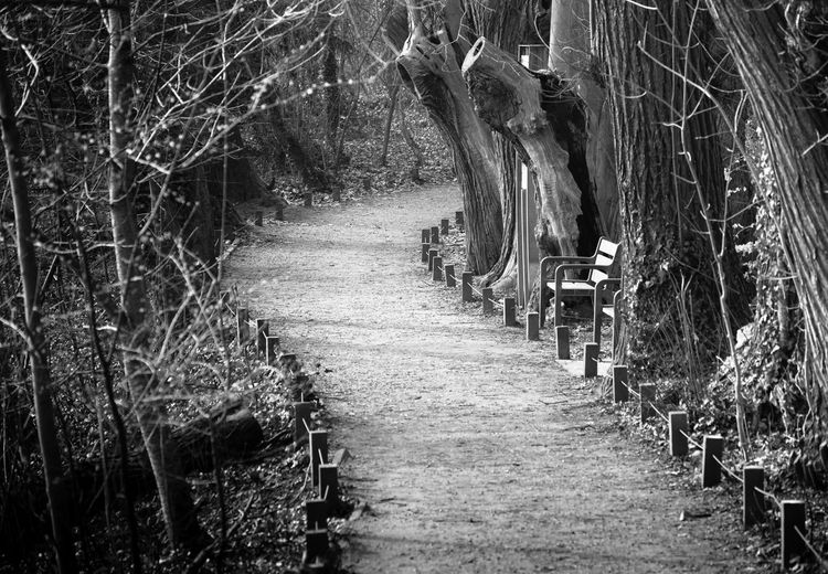 Blackandwhite Day Diminishing Perspective Forest Growth Nature Outdoors Tree