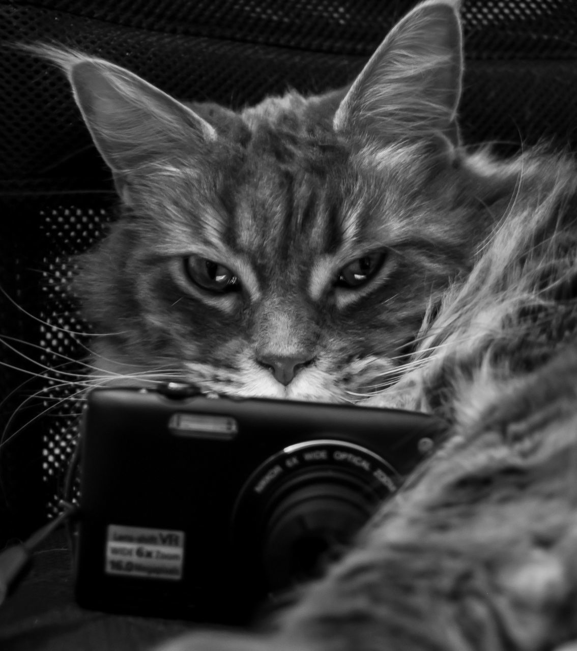 domestic cat, mammal, domestic animals, technology, animal themes, pets, feline, indoors, camera - photographic equipment, photography themes, no people, close-up, day
