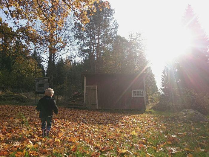 Autumn in the Sherwoodskogen Östergötland
