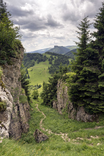 Velka Fatra Beauty In Nature Cloud - Sky Coniferous Tree Day Environment Forest Grass Green Color Growth Land Landscape Mountain Nature No People Non-urban Scene Outdoors Pine Tree Plant Scenics - Nature Sky Tranquil Scene Tranquility Tree WoodLand