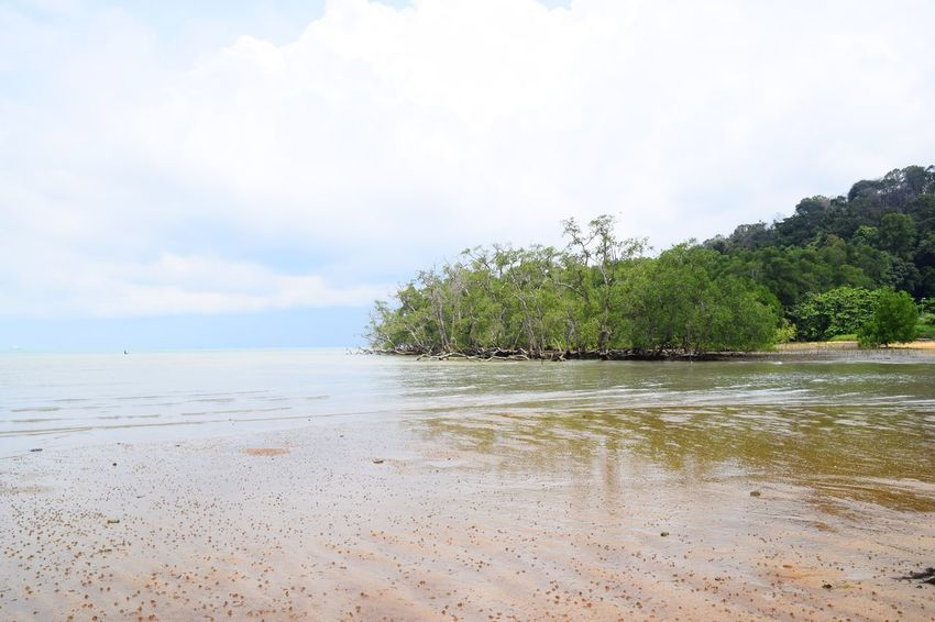 Mangrove trees at Pantai Cermin, or Mirror beach in Teluk Kemang, Negeri Sembilan, Malaysia. Beach Sea Water Sand Tree Tranquility Nature Sky Cloud - Sky Tranquil Scene Beauty In Nature Outdoors Landscape Scenics Day Vacations No People Blue Travel Destinations Mangroves Ecosystem  Low Tide Reflection