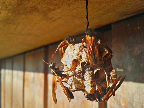 Deus cuida de toda sua criação... Coisa De Deus Natureza Perfeita♡♥ Abelhas Vespoes Wasp Wasp Nest