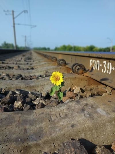 Yellow flowers on railroad track