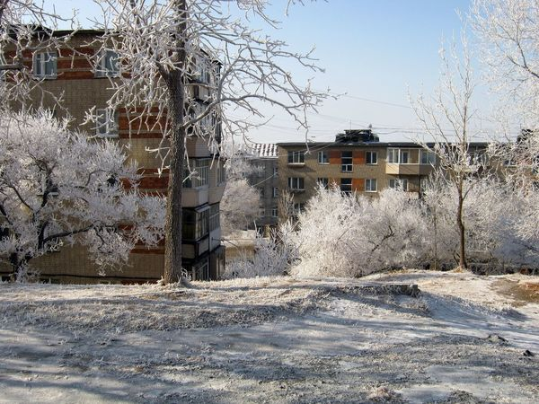 Magic trees Cold Frost Morning Hoarfrost Trees Branches Winter Sky Town House