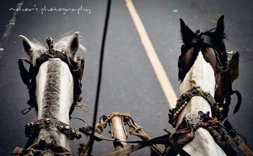 Kolkata Horse Caragea Redroad First Eyeem Photo