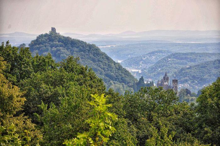 Drachenfels und Drachenburg Castle Ruin Castle Tree Mountain Tree Area Tea Crop Forest Pinaceae Sky Landscape Mountain Range