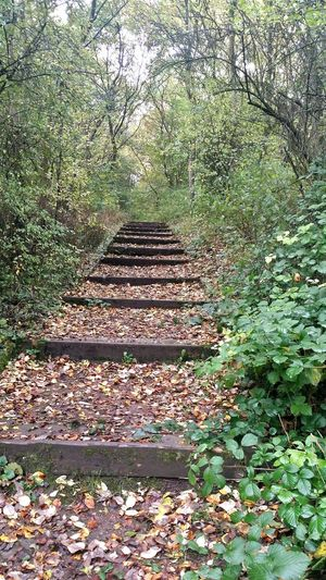 Autumn🍁🍁🍁 Leaves Pathway Walking Around Medlock Vale With Big Steps To Autumne🍃🍂 EyeEm Nature Lover