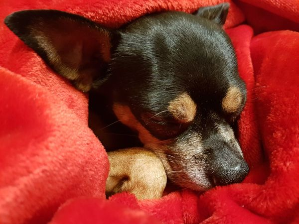 Dog Pets One Animal Red Animal Themes Mammal Indoors  No People Domestic Animals Protruding Day Close-up EyeEmNewHere