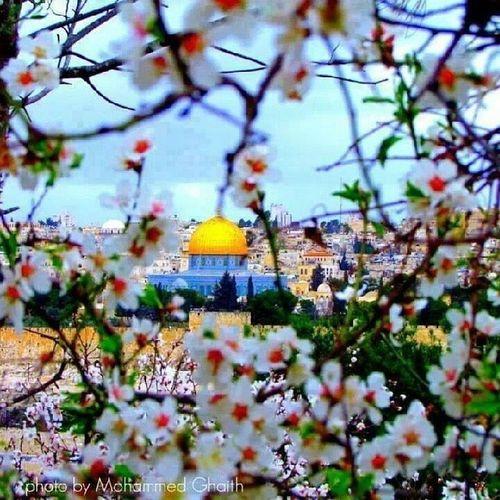 ستبقين من أجٍملُ بقآع العآلم سنعود يومآ مآ Palestine Jerusalem <3 <3