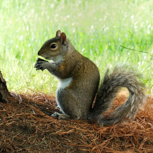 Panasonic Lumix DMC-FZ80 Animal Wildlife Animal Themes Animal Animals In The Wild One Animal Squirrel