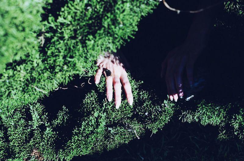 Organsinsleep Laurenluck Film Analog Creepy Macabre Cult Hands Women Mothernature Colors Woman Goddess Supernatural 35mm Odd Dark