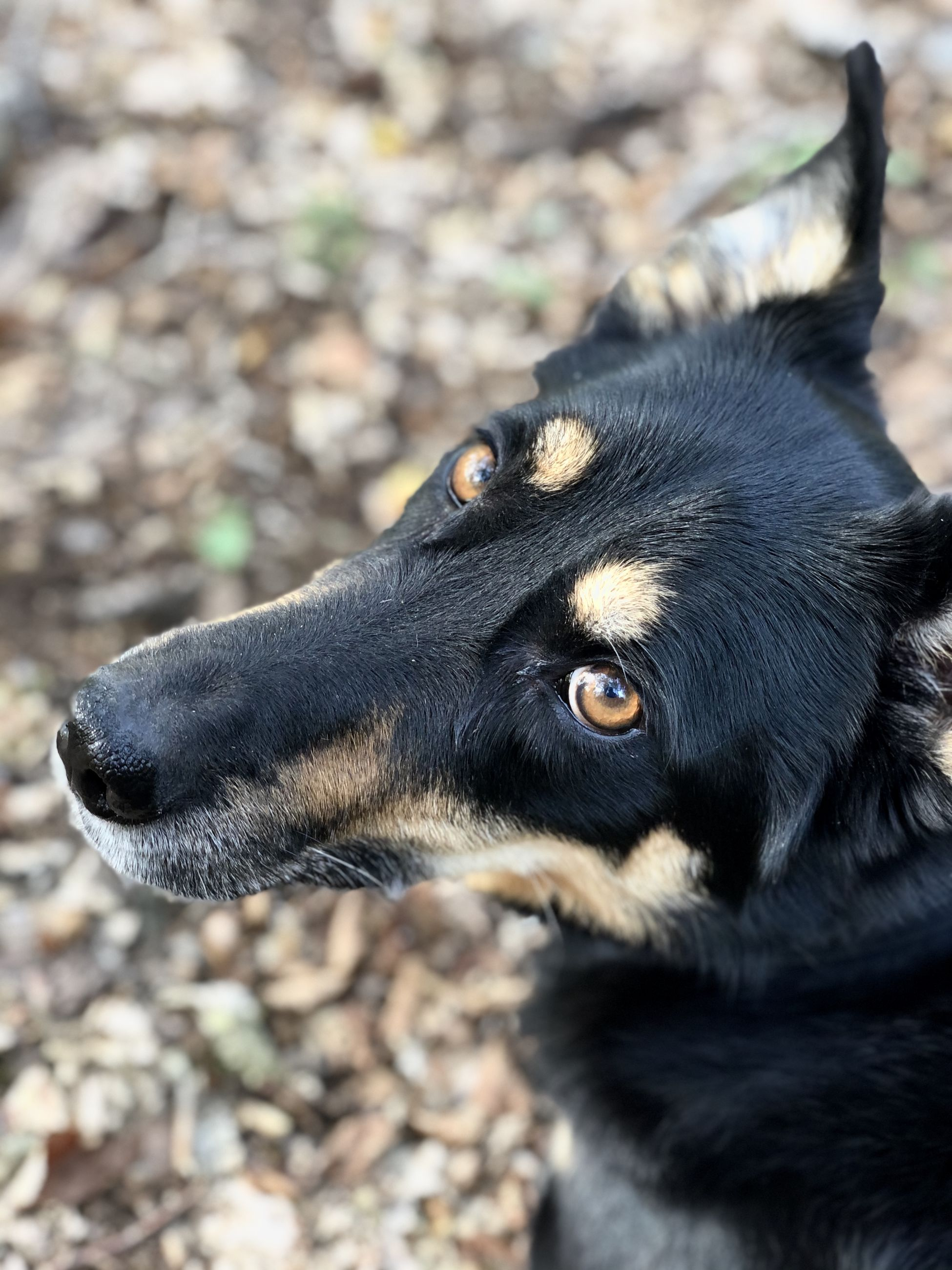 one animal, animal themes, animal, mammal, black color, vertebrate, pets, domestic animals, domestic, animal body part, close-up, no people, dog, focus on foreground, canine, animal head, looking, day, looking away, selective focus, profile view, animal eye, snout