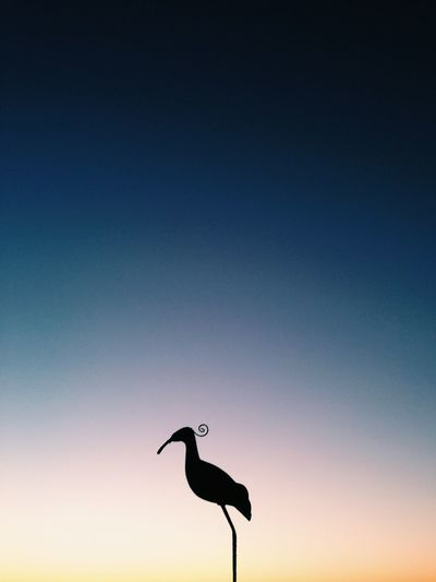 Sunset Sky Bird