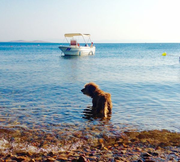 All About Swimming Swimming Dog Serenity Cold Water