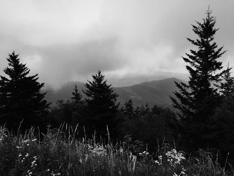 Nature Tree Growth Landscape Forest Mountain Sky Outdoors Beauty In Nature Grass Day Clingmans Dome North Carolina Great Smoky Mountains  USA Blackandwhite Black And White EyeEm Best Shots The Week On EyeEm Black And White Friday