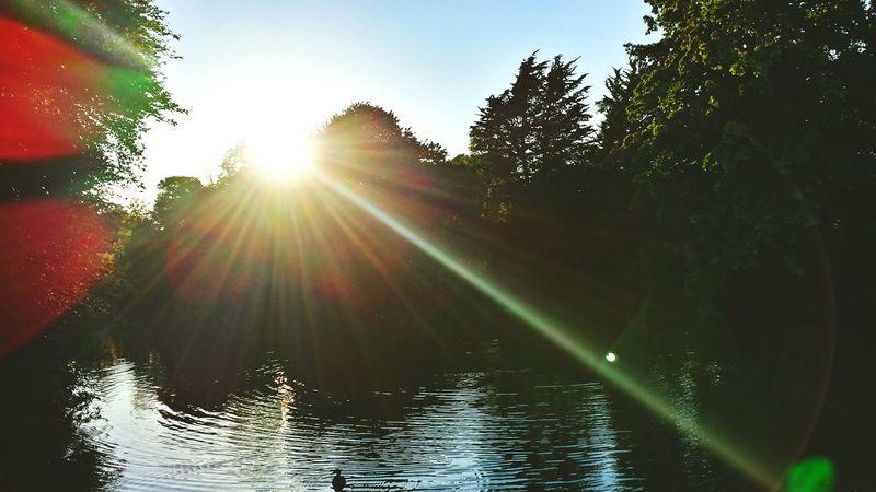 Creative Light And Shadow Enjoying The Sun Relaxing Sound Of Life Beautiful Nature Sunshine Capturing Freedom