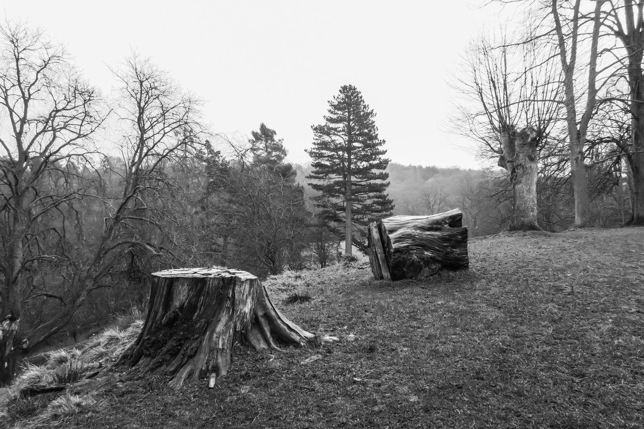 Tree Stumps Against Trees On Landscape