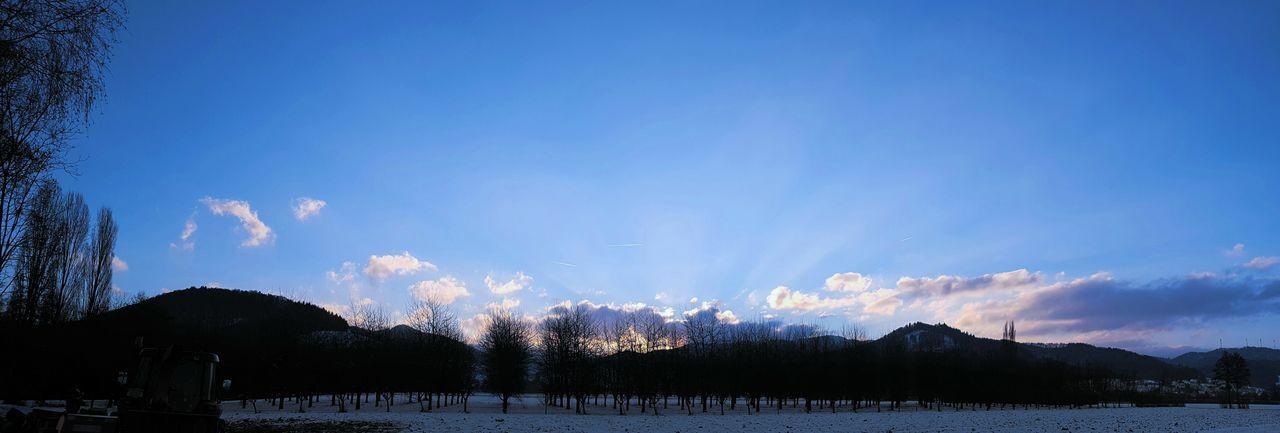 Sky Blue Tree