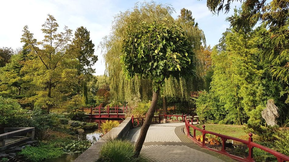 Asian  Asian Culture Asian Garden Garden Garden Photography Green Green Color Greenery Green Green Green!  Autumn Autumn Colors Autumn Collection Chinese Architecture Growth Nature Nature_collection Nature Photography Nature On Your Doorstep Zoophotography Zoo Eye4photography  Taking Photos Taking Pictures Trees Trees And Sky