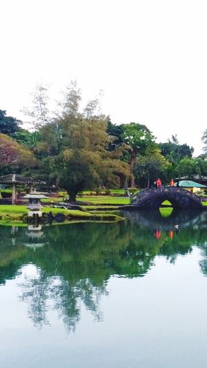 Spring in Liliokalani Gardens. Spring Time Spring Bridge Pond Nature Nature Photography Water Reflections Water Green Lawn Pathways Park Walking Around Relaxing Enjoying Life Hilo  Big Island Hawaii Hawaii Life