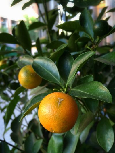 Coffee and citrus break at Everyman Espresso on July 30, 2014 in New York City.