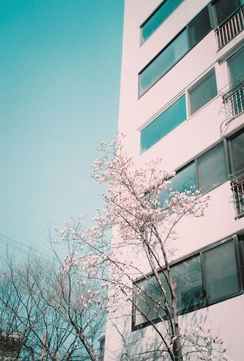 집앞, Fujifilm Love 35mm Filmcamera Photography Seoul South Korea Film Nature First Eyeem Photo Film Photography 35mmfilmphotography Neon LifeSky Beauty In Nature 필름 필름카메라 필름사진 사진 No People Flower