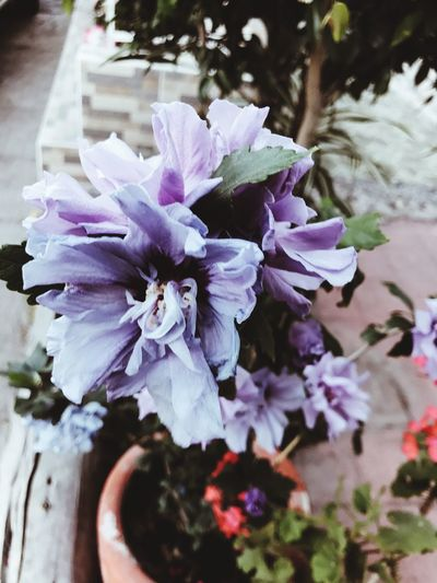 Flower Nature Purple Petal Beauty In Nature Growth Fragility Plant No People Close-up Freshness Day Outdoors Flower Head