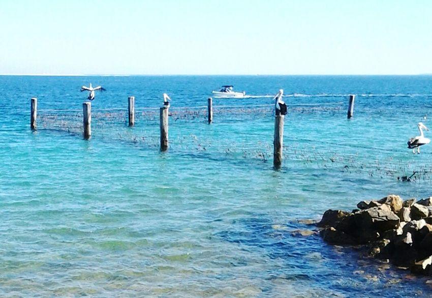 Straddie Amity Point Aussie Life