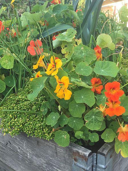 Autumn Colours Relaxing Taking Photos Enjoying Life Autumn Collection Autumn Flowers Wooden Box