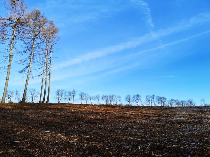 Low angle view of bare trees on field against blue sky
