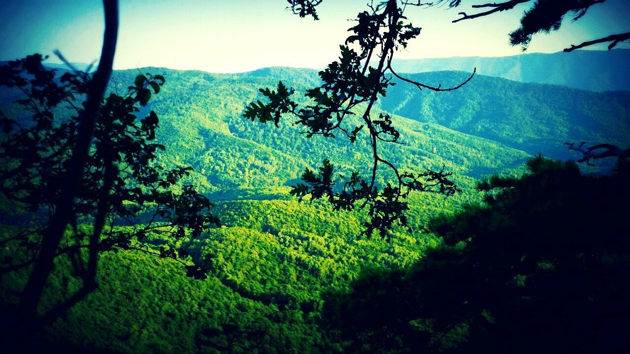 nature, landscape, mountain range, mountain, tree, flying, beauty in nature, no people, day, outdoors