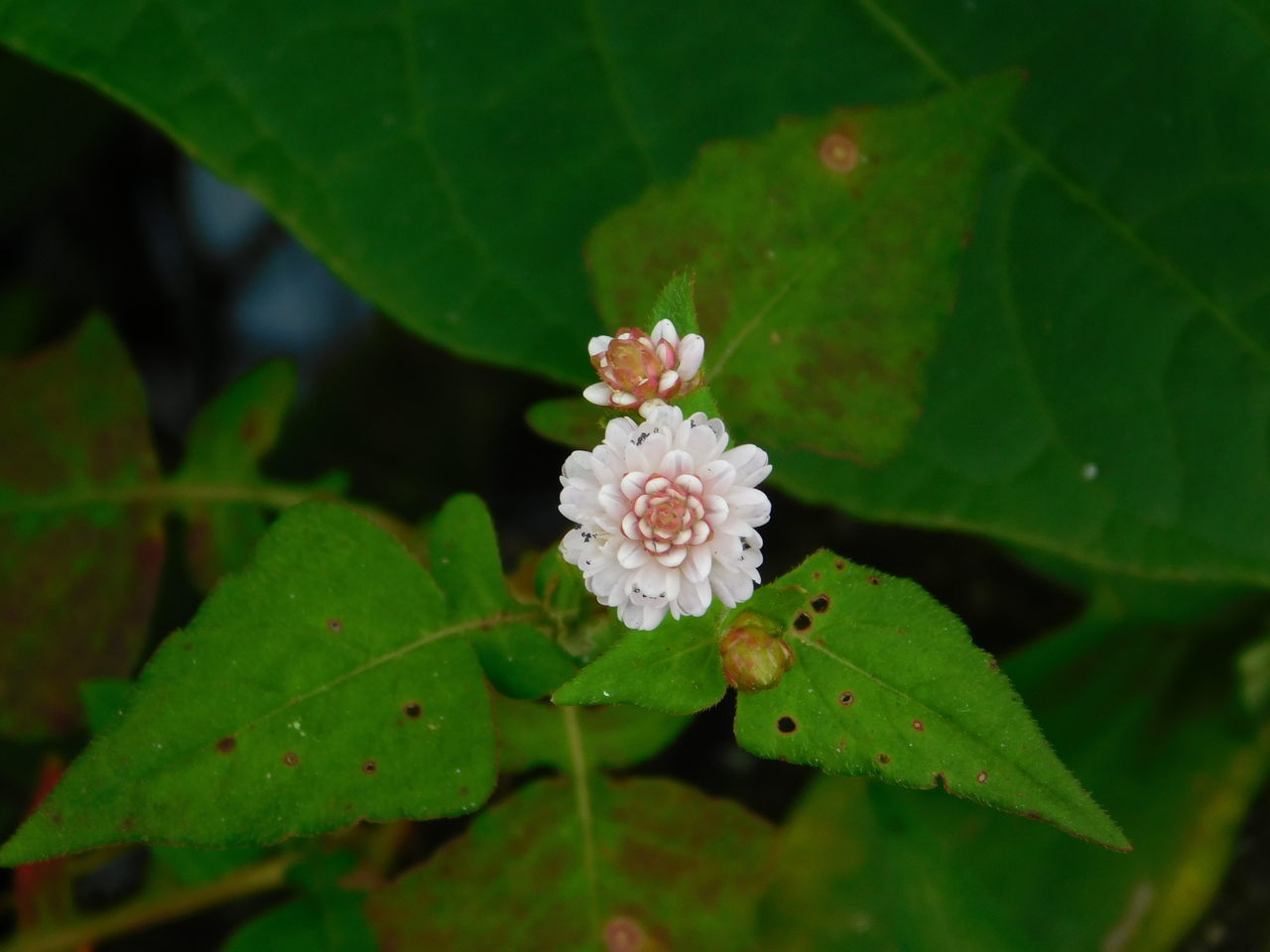 leaf, plant part, plant, flower, growth, beauty in nature, flowering plant, close-up, fragility, vulnerability, freshness, green color, nature, petal, inflorescence, flower head, water, no people, day, outdoors, pollen, leaves