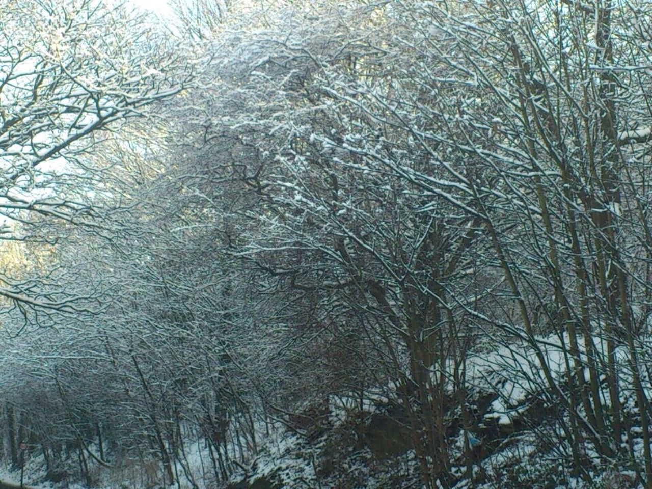 tree, bare tree, nature, branch, beauty in nature, no people, cold temperature, tranquility, day, winter, outdoors, forest, snow, growth, plant, backgrounds