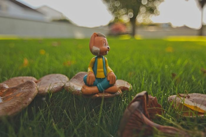 Dylan on Mushrooms Dew Light Low Angle View Low Position Mushrooms 🍄🍄 Shrooms Bokeh Character Childhood Close-up Day Dylan Field Garden Photography Grass Green Color Growth In The Garden Magic Roundabout Nature No People Outdoors Toy