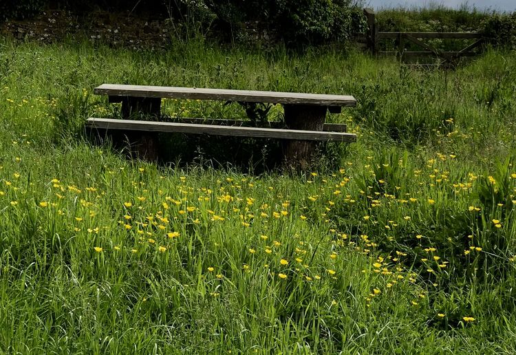 Bench Seat Field Of Buttercups Beauty In Nature Day Environment Field Flower Flowering Plant Grass Green Color Growth Land Landscape Nature No People Non-urban Scene Outdoors Plant Rural Scene Scenics - Nature Tranquil Scene Tranquility Yellow