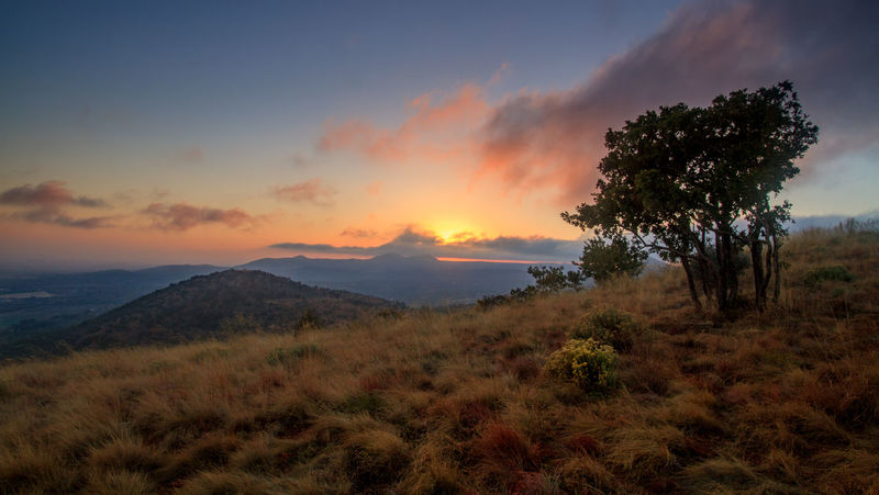 RustenBurg South Africa Tree Hill Landscape Nature Oppieberg Outdoors Sunrise Tranquil Scene Tranquility Tree
