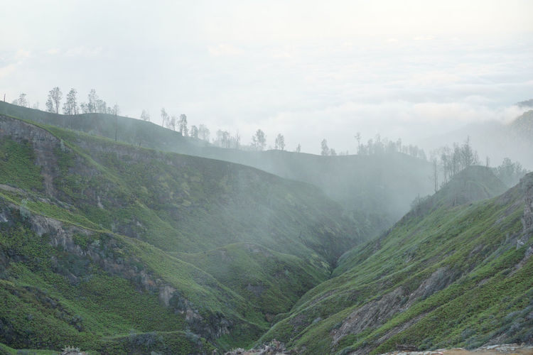 Morning view at Ijen volcano complex, Indonesia Fog Scenics - Nature Tranquil Scene Beauty In Nature Tranquility Sky Environment Mountain Landscape Nature No People Land Plant Non-urban Scene Tree Day Remote Outdoors Idyllic Hazy