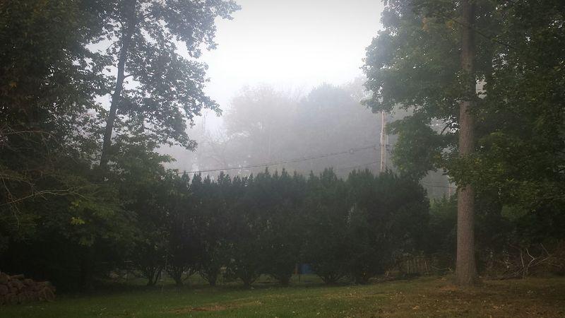 Backyard Morning Fall Fog What The Fog First Eyeem Photo