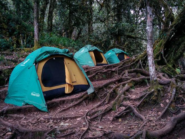 Outdoors Tents Camp Trekking Mount Kilimanjaro Tansania Kilimanjaro EyeEmNewHere Nexus5 Nexus5photography Jungle Camp Umbwecavecamp Umbwe Route Mountains Nature Adventure 7summits SevenSummits Tanzania