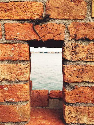 Brick Wall Lizard Architecture Laguna Venezia Window Island Certosa