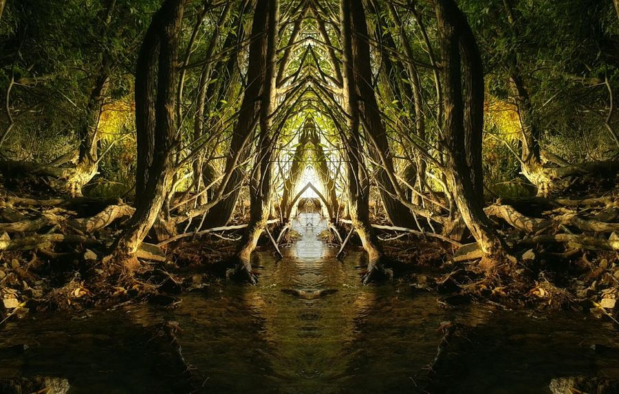 Beauty In Nature Dreamy Edited Forest Magic Magical Mirror Mirrored Nature Nature No People Outdoors Reflection Scenics Standing Water Tree Tree Water