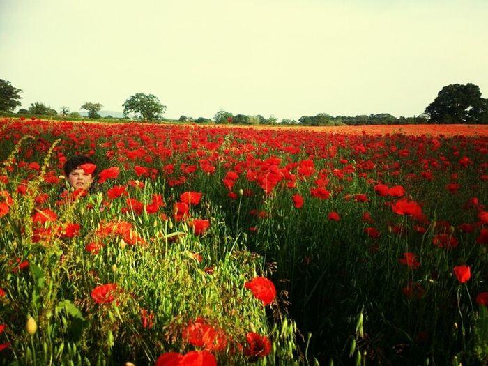 Hadnell Poppyfield
