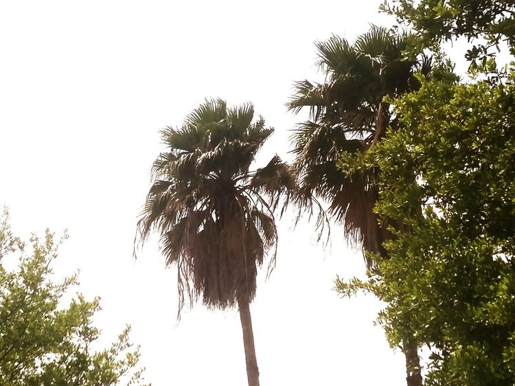 Palm Trees Nature Sky And Clouds Texas Made Hello World ✌ Relaxing