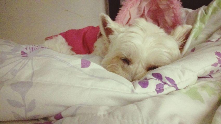 繼薇 Chi-wei Smile Family❤ She Is My Sister I Love My Dog Relaxing Sleeping Hello World 這是今天早上,我拖著疲累的身軀,準備出門上班時的景象...( ´_ゝ`)