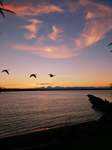 Bird Water Sky Cloud - Sky Sunset Waterfront Tacoma_WA Pugetsound Tacoma_WA Cloudsandsky