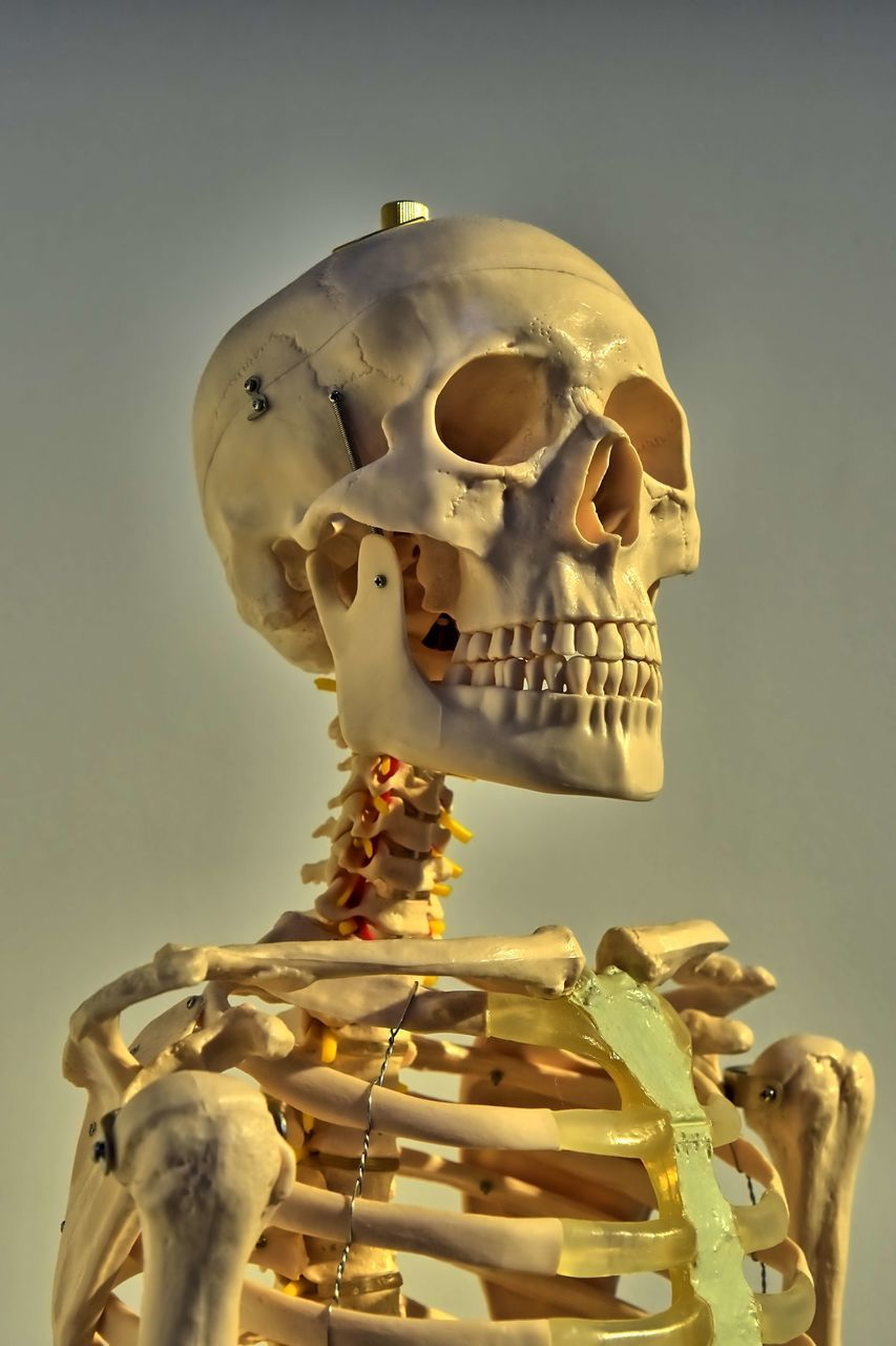CLOSE-UP OF HUMAN SKULL AGAINST GRAY BACKGROUND