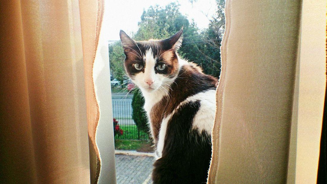Miau! My Cat! Cat Cute Pets