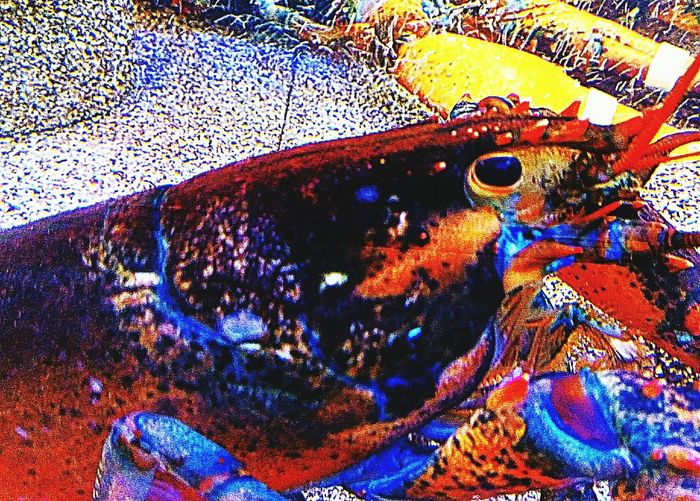 Frutos de la Mar. Multi Colored Close-up Full Frame Pattern No People Day Outdoors Nature UnderSea