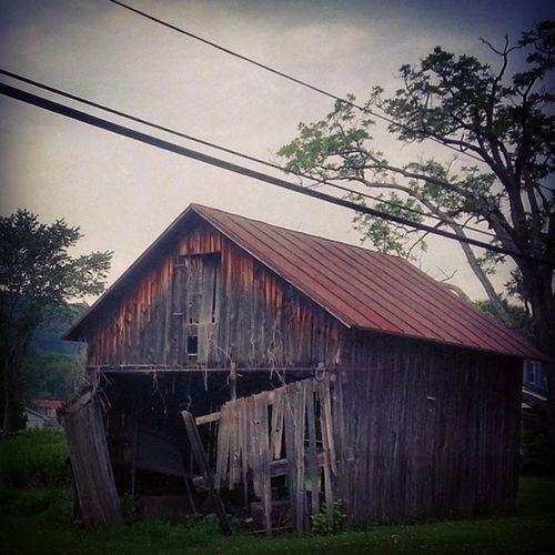 Shed needs minor repairs Ruraldecay Rurex Backroads Dryrot lumber trees july appalachia pennsylvania