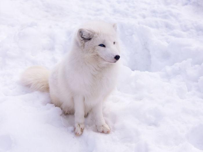White dog on snow covered land